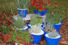 With these tips, anyone can grow lavender in a container - CSMonitor.com