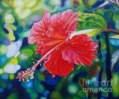 Tropical Hibiscus - By Morgan Ralston