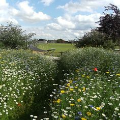We supply Wildflower Seed, Plugs & Bulbs for Meadows - Meadow Mania