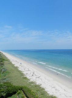 Dog Friendly Beaches Treasure Island Florida