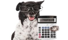 You have decided to take the big step to becoming a dog owner. Dogs live long lives, so you are making a commitment for at least 10 years to be responsible for all your furry friend's needs. But how much does a dog cost? #dogs #costs #finances #financial #budget #planning #pets #animals