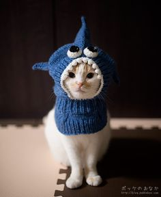 Cats need hats too. I think this is a tea pot cover but I'm honesty not sure it is not some odd cat hat. I Love Cats, Cute Cats, Funny Cats, Funny Animals, Cute Animals, Crazy Cat Lady, Crazy Cats, Cat Shark, Shark Hat
