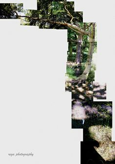 Tree Joiner by Rega Photography.This is something really neat. Love the position and that it is landscape. Photography Themes, Photography Projects, Digital Photography, Landscape Photography, Collages, Collage Artwork, David Hockney Photography, Manipulation Photography, Ways Of Seeing