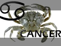 Cancer Element Properties...  Likes       Hobbies, Romance, Children, Home and Country, Parties, Gourmet food, Shopping trips, A calm working atmosphere  Dislikes       Aggravating situations, Failure, Opposition, Being told what to do, Advice (good or bad).    Compatibility       Taurus, Scorpio, Virgo, Pisces