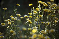 Slideshow: The 13 best Calif. native drought-tolerant plants for your garden | 89.3 KPCC