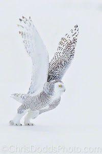 God I love owls!