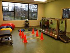 Advanced Physical Rehabilitation | Central Hospital for Veterinary Medicine