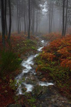 """Colors of Rain IV """" By: Juan Pavon"""