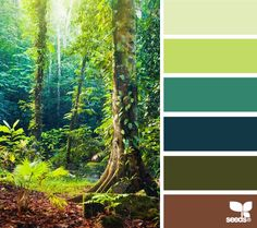 Color Forest from Design Seeds