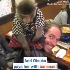 Kayabuki Izakaya restaurant uses monkeys as waiters ‪We are Not monkeying around here! If you have been dreaming of one day having your very own monkey butler You can finally realise your dream. Make a reservation at Wild Animals Videos, Funny Animal Videos, Cute Funny Animals, Funny Animal Pictures, Animal Memes, Cute Baby Animals, Funny Cute, Animals And Pets, Hilarious