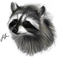 Raccoon by ~CeruleanRaptor on deviantART