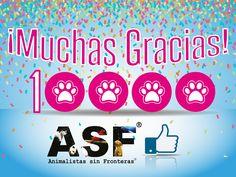 Diseño de post para #Facebook de ASF - Animalistas sin Fronteras. #Design #Graphic #Community #Management