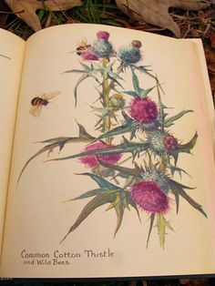 from, The Nature Notes of an Edwardian Lady