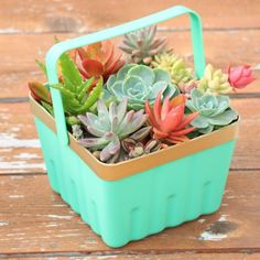 21 Creative Succulent Container Gardens to DIY or Buy Now via Brit + Co