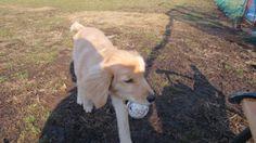 get your ball! ... Good job, Pomme :D