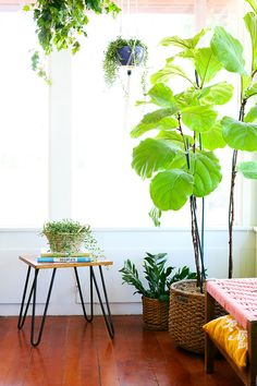 Sometimes you just have to think outside the pot. To add texture to your space, keep your plants in handwoven baskets.