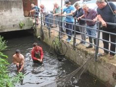 524 karpers gered in Munsterbilzen (Bilzen) - Het Belang van Limburg. Zij waren door de overstromingen uit de vijver in de vuile beken gesukkeld.