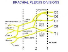 10 Best Cervical Radiculopathy And Dermatomes Images In