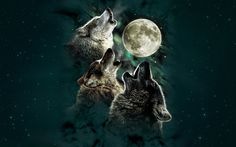 Three Wolf Moon t-shirt from The Mountain. Three wolves howling at the full moon. Wolf design t-shirt. Available in Child and Adult sizes. Wolf T-shirt, Wolf Howling, Gray Wolf, White Wolf, Lone Wolf, Three Wolf Moon Shirt, Band Shirts, Tee Shirts, Sweat Shirt