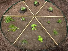 How to Plant a Pizza Garden #tomato #peppers #onion #basil #rosemary #thyme #oregano