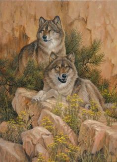 """Crystal Morning - Gray Wolves"""