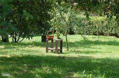 Az Almafa (de appelboom) in Nagykónyi, Tolna-Mecsek huren? White Gardens, Summer Garden, Hungary, Farming, Outdoor Decor, Holiday, Vacations, Holidays, Vacation