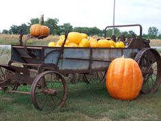 Hawk Valley Garden...my husband's big Atlantic Giant Pumpkin he grew this summer in front of our old manure spreader