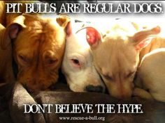 Pitbulls are regular dogs!
