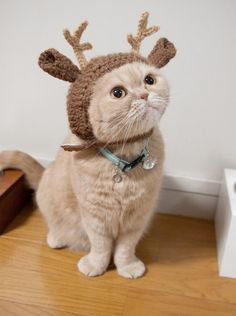 Kitty Reindeer! OMGosh too cute!!
