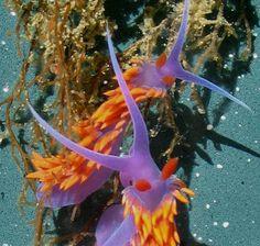 Nudibranch sea slugs gallery