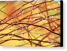 Mother Nature Canvas Print featuring the photograph Mother Natures Christmas Lights by Elizabeth Dow