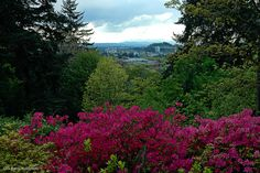 Hendricks Park Rhododendron Garden - Eugene, OR--Great place for a picnic!