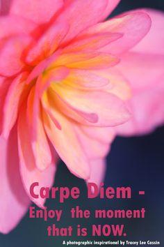 Mia Bella Passions: Carpe Diem Quote.