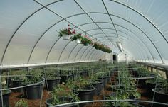 Buy Commercial Greenhouse Cheap - 16x24x8