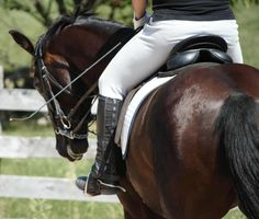 How to Halt Without Pulling on the Reins