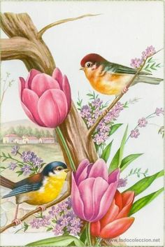 Online Photo Editor - Edit your photos, pictures and images online for free Fabric Painting, Painting & Drawing, Motifs Animal, One Stroke Painting, China Painting, Bird Drawings, Decoupage Paper, Vintage Birds, Bird Art