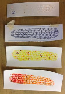 New lesson for fourth grade will combine pop art, printmaking and corn. Will be great for using up all the random 2 x. Fall Art Projects, School Art Projects, Thanksgiving Art Projects, 2nd Grade Art, Fourth Grade, Elementary Art Lesson Plans, Doodle Drawing, Ecole Art, Art Curriculum