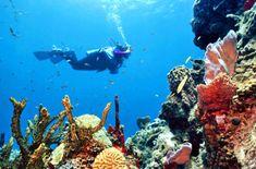 Waterbaby paradise...  Google Image Result for http://i.slimg.com/sc/sl/photo/b/be/belize-snorkel-caribbean-xl.jpg