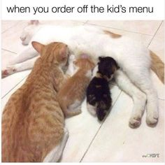 76 Today's Most Funny Memes #134