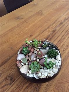 Succulent design DIY