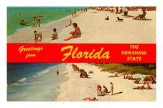 Amazon.com: Greetings from Florida Premium Poster Print, 8x12: Home & Kitchen