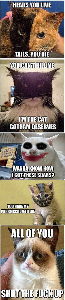 This Grumpy Cat craze - Dont find him/her at all funny. However, this Batman/Dark Knight spoof is a laugh; I even do the voices - my Bane is hysterical! Batman Cat, I Am Batman, Batman Meme, Batman Stuff, Memes Humor, Funny Humor, Otter, Funny Grumpy Cat Memes, Grumpy Kitty