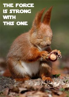 jedi squirrell - the new hope