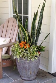 Thrilling About Container Gardening Ideas. Amazing All About Container Gardening Ideas. Succulents In Containers, Container Plants, Succulents Garden, Garden Pots, Container Gardening, Planting Flowers, Porch Plants, House Plants Decor, Plant Decor