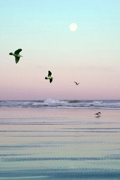 Seagulls, Cannon Beach, Oregon