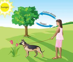 Cómo aprovechar la Fotosíntesis para limpiar nuestro entorno - http://jardineriaplantasyflores.com/como-aprovechar-la-fotosintesis-para-limpiar-nuestro-entorno/
