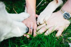 Outdoor Spring Engagement Session with Dogs by Ampersand Wedding Photography | Two Bright Lights :: Blog