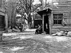 Anadolukavağı-ortadaki  çınar ağacı yol yapılırken 1950li yıllarda kesilmiş.