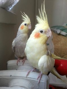 Pamuk & junior pamuk :)