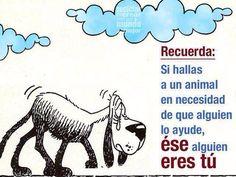 Frase Animalista